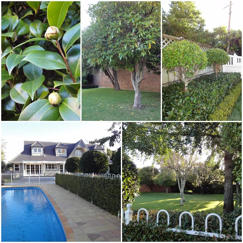 Onslow Avenue, large city garden and pool